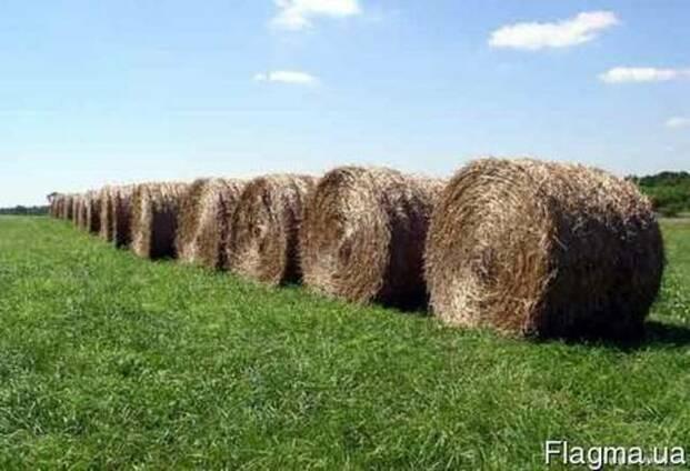 Продаем сено полевое и луговое . с доставкой.