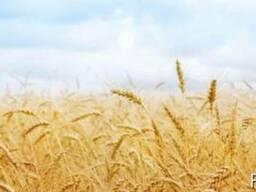 Продам сельхозпредприятие в Черкасской области - 1700 га.