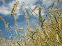 Продам сельхозпредприятие 2800 в Николаевской области