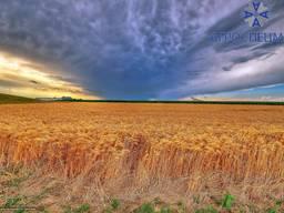Продам сельскохозяйственное предприятие в Полтавской области
