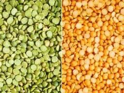Продам семена гороха сахарного оптом и в розницу