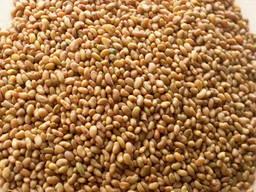 Продам семена Люцерны. Цена договорная!
