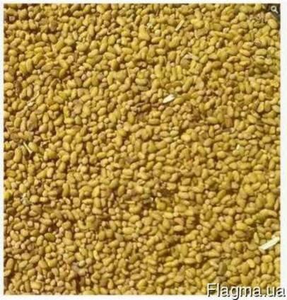 Продам семена люцерны не магниченной