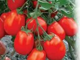 Продам семена овощей ( с первых рук оптом от производителя)