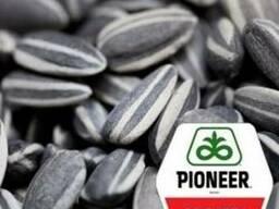 Продам , семена соняшнику компанії Pioneer (Пионер)
