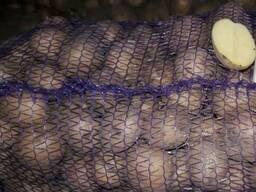Продам семенной картофель Ривьера