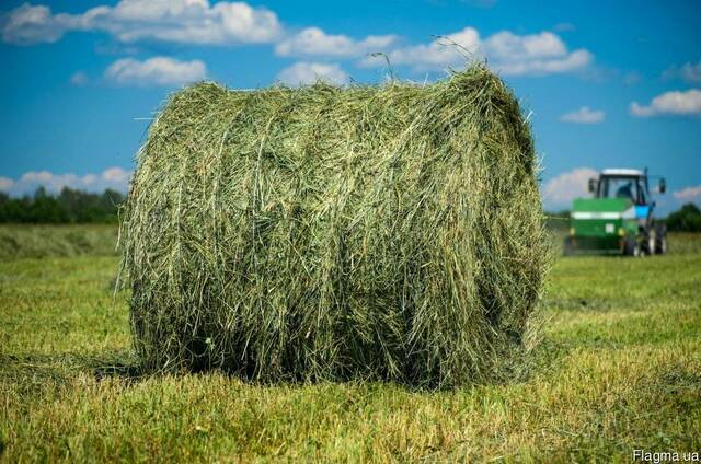 Продам сено в рулонах и в тюках недорого. есть доставка звон