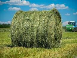 Продаем сено полевое и луговое. недорого. с доставкой.