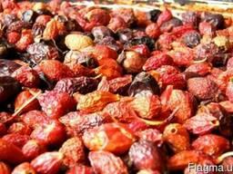 Продам Шиповник плоды