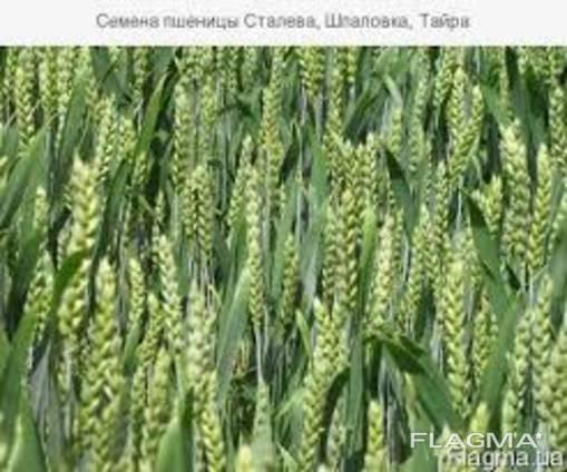 Продам Шпаловка (пшеница)