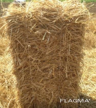 Продам солому пшеничную