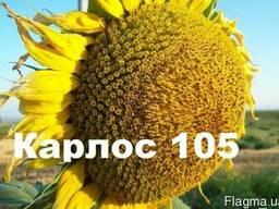 """Продам Соняшникове насіння """"Карлос105"""" (105дн. вегетації)"""