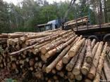 Продам сосновые дрова 4 метра - фото 1