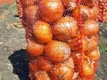 Продам сто тонн лука Репчатого, фото реальные. - фото 3