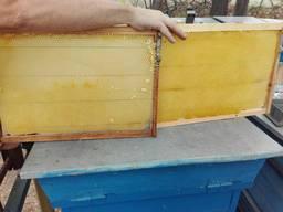 Продам Сушь пчелиную отстроенную 2019 года Доставка