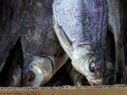 Продам вяленую рыбу – тарань, лещ, подлещ, густера, судак