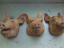 Продам: Свиные Головы, Язык, Уши, Щека .