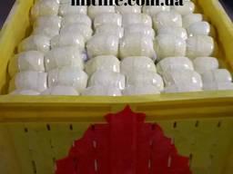 Продам сыр Кальята Голландия