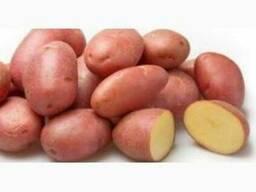 Продам товарну картоплю від 20т