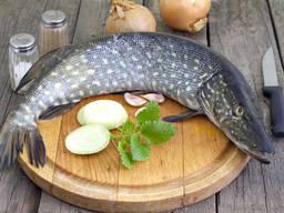 Продам товарную рыбу!!!