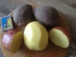 Продам товарный картофель. Мелоди, Бела Роса. Опт от 20т