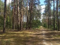Продам участок Бородянский район пгт. Бабинцы – 17.4 сотки