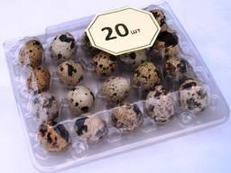 Упаковка для яєць курячих, перепелиних