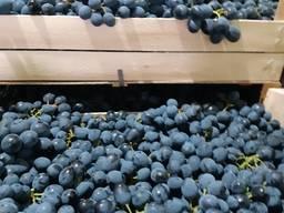 Продам виноград сорт Молдова от Молдавского производителя