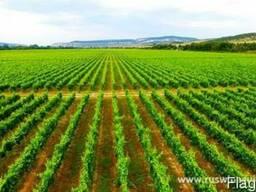 Продам виноградники, яблочные и грушевые сады, сельхоз земля