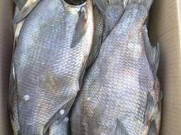 Продам вяленую речную рыбу оптом