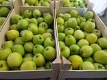 Продам яблоки из Польши - фото 3