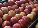 Продам яблоки из Польши - фото 8