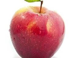 Продам яблоки сорта Айдаред