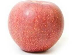 Продам яблоки сорта Фуджи
