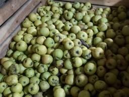 Продам яблоко 2 сорта оптом