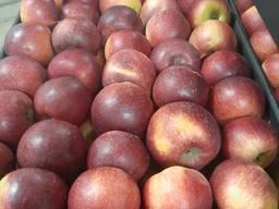 Продам яблоко в Украине , Республике Беларусь