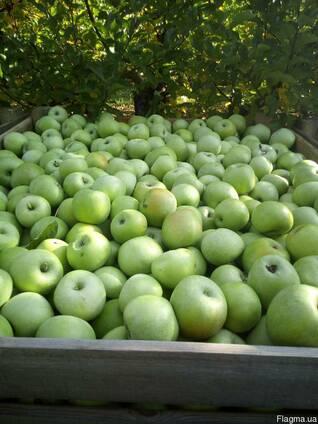 Продам яблука Симиренка