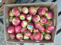 Продам яблука з холодильника(фрешовані), Хмельницкая обл. ht