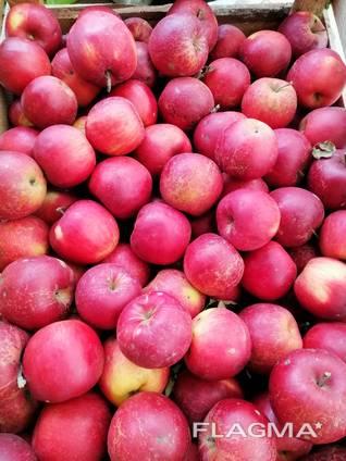 Продам яблука зимових сортів