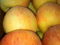 Продам яблуко 1 та 2 сорту гарно зберігається