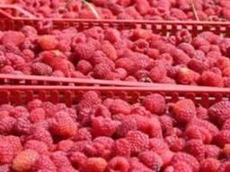 Продам ягоду малины