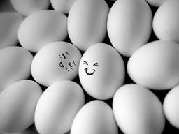 Продам яйцо С0, С1, С2, СМ белое