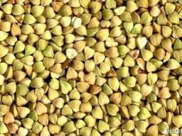 Продам зеленую гречку, доставка по Украине-Бесплатно!!!