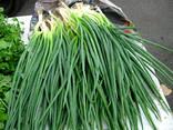 Продам зеленый лук перо круглогодично - фото 1