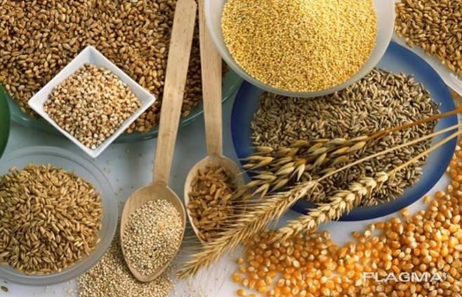Продам зерно на экспорт