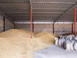 Продам зерно пшеницы нового урожая