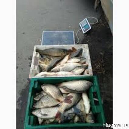 Продам живую рыбу малька:. линь, щука. . .