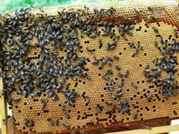 Продаём пчелопокеты пакеты 750 грн