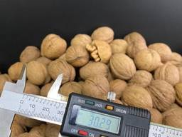 Экспорт Орех неочищенный, тонкокорый/WALNUT INSHELL, DRIED, THIN-SHELLED