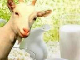 Продаю козье молоко, творог, брынзу, Адыгейский сыр